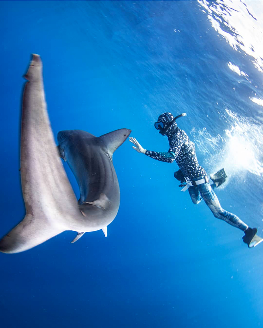 Divemaster redirecting Galapagos Shark