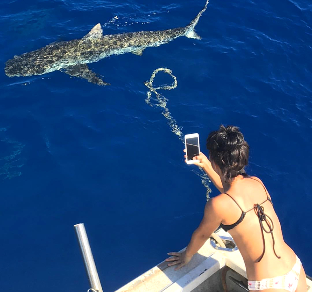 Photographing Sharks from the Boat