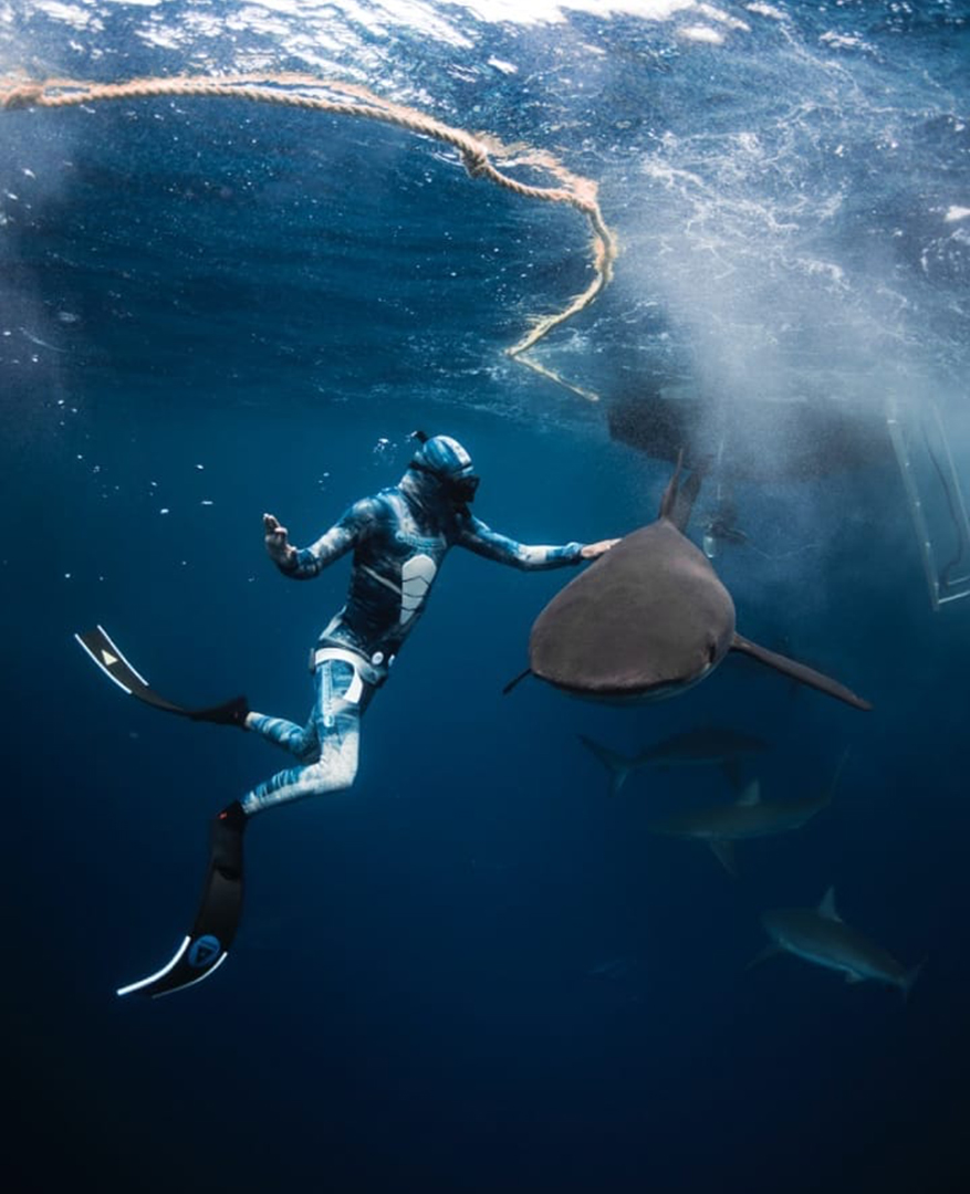 Gentle Touch from Divemaster to Galapagos Shark