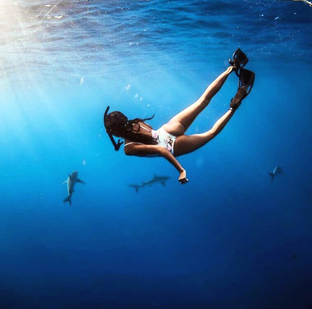 Snorkeler and Sharks