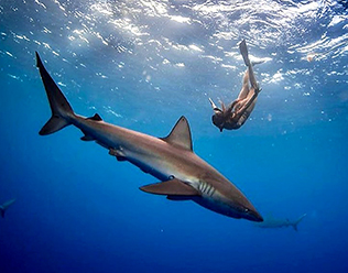 swim_with_sharks_hawaii